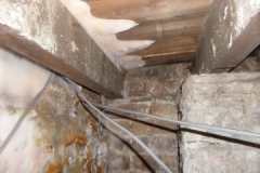 dry rot in floor and fruiting bodie on wall